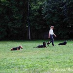 Hunde Gruppenarbeit Klasse 2